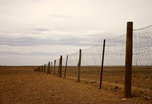 dingo fence dreamstime_s_4612934