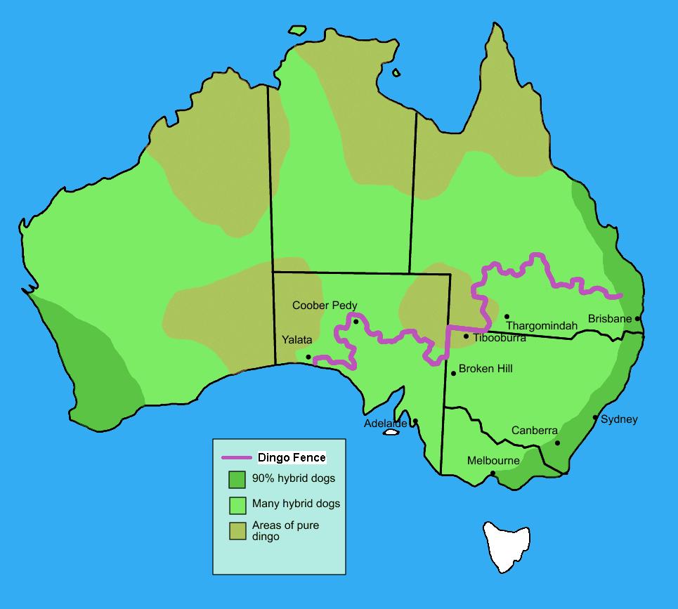 Great walls fences of australia sustainability soapbox dingofenceinaustralia map gumiabroncs Choice Image