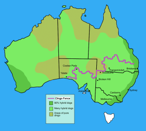 Dingo_fence_in_Australia map