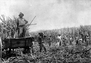 South Sea Islander cane workers on a plantation in North Queensland ca. 1868