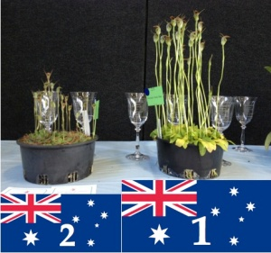 orchid podium.001