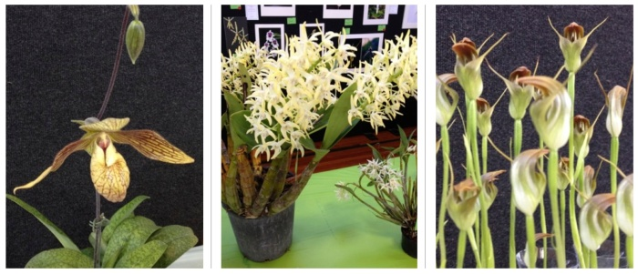 orchids combination 9