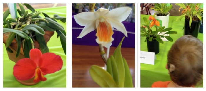 orchids compilation 6