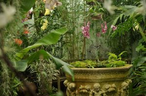 Orchids_in_GGP_Conservatory